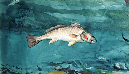 Channel Bass painting, a Winslow homer paintings reproduction, we never sell Channel Bass poster