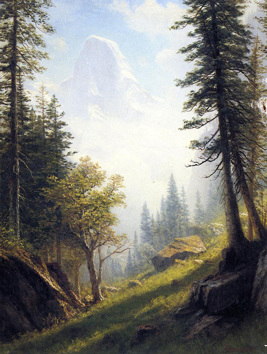 slope with trees
