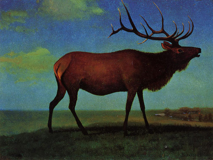 Oil Painting Reproduction of Bierstadt - Elk
