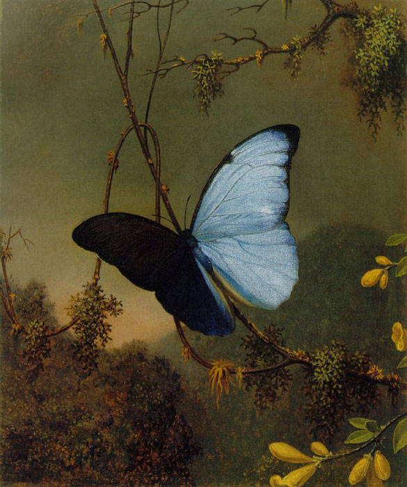 Oil Painting Reproduction of Heade- Blue Morpho Butterfly
