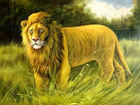 Wholesale Oil Painting oil paintings gallery Animal painting