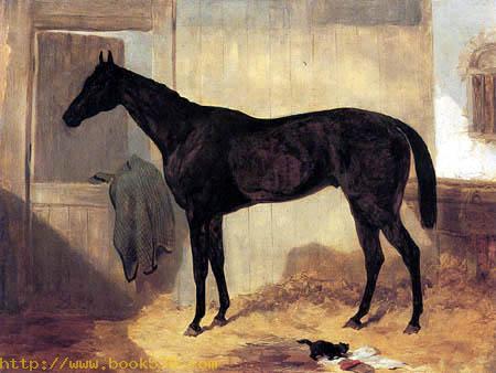 Van Tromp in stable