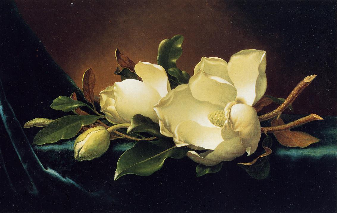 magnolia painting - photo #14