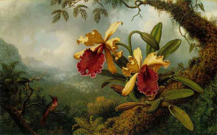 Oil painting for sale:Orchids and Hummingbird, c.1875-1883