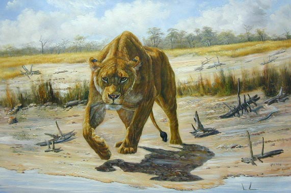 Oil painting for sale:lion-008