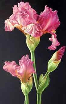 Oil painting for sale:floral12