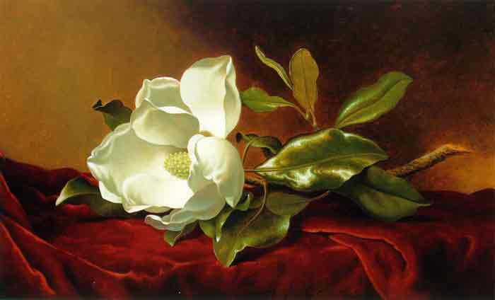 Oil painting for sale:Single Magnolia on Red Velvet, c.1885-1895