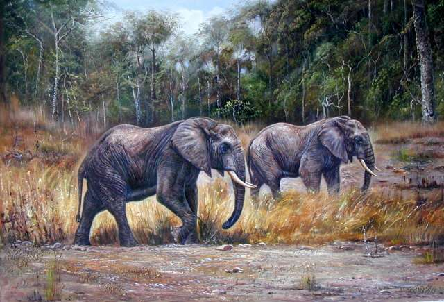 Oil painting for sale:elephant-008
