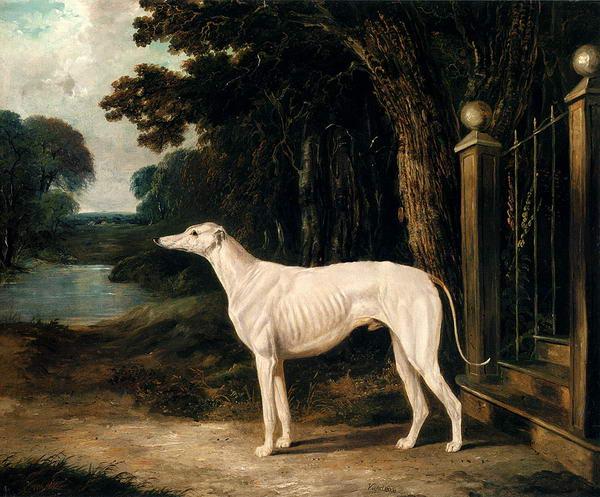 A White Greyhound