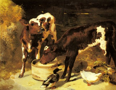 Calves Feeding