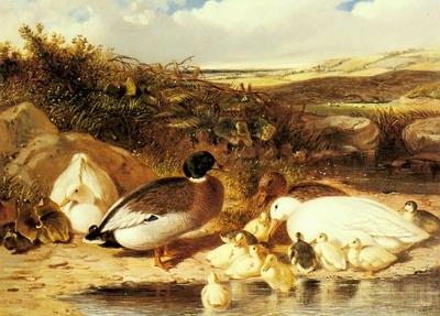 Mallard Ducks and Ducklings On A River
