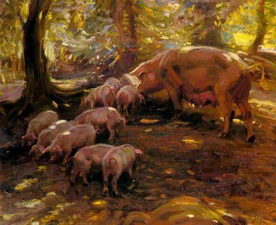 Pigs In A Wood, Cornwall