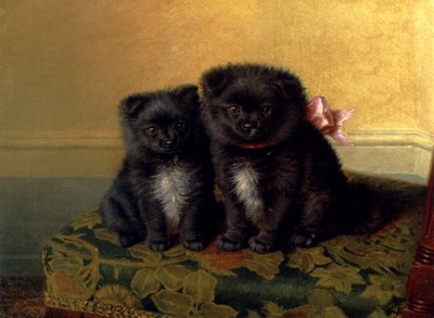 Two Chow Pups Seated On A Chair In An Interior