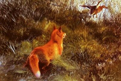 Eluding The Fox