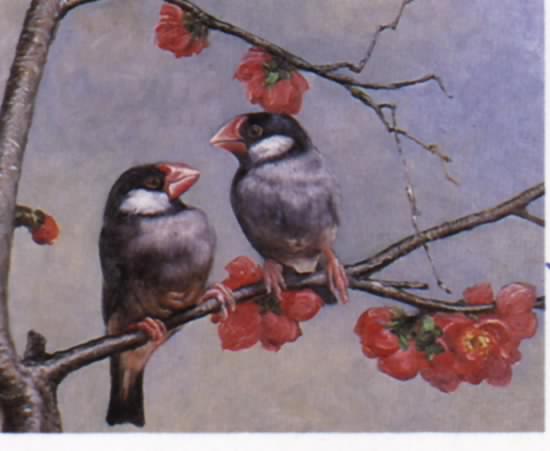 birds-001