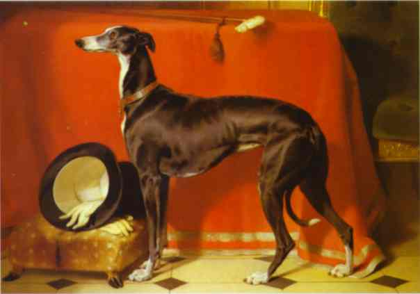 Eos, A Favorite Greyhound, the Property of H.R.H. Prince Albert. 1841