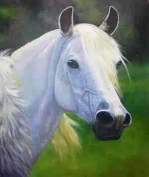 horses-034