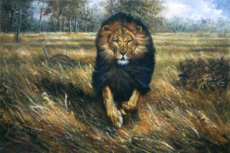 Oil painting for sale:lion-005