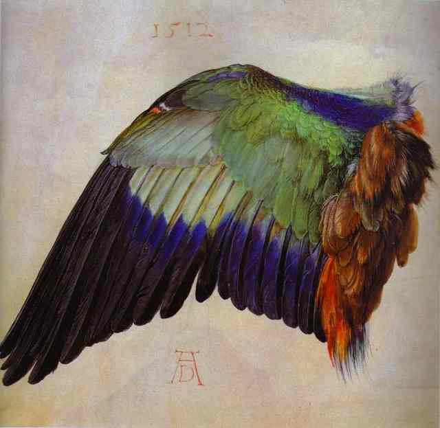 Oil painting:Wing of a Roller. 1512