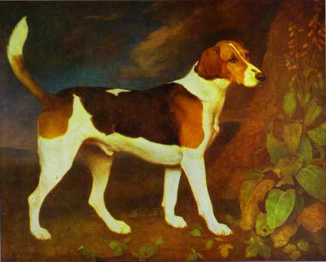 Oil painting:A Foxhound, Ringwod. 1792