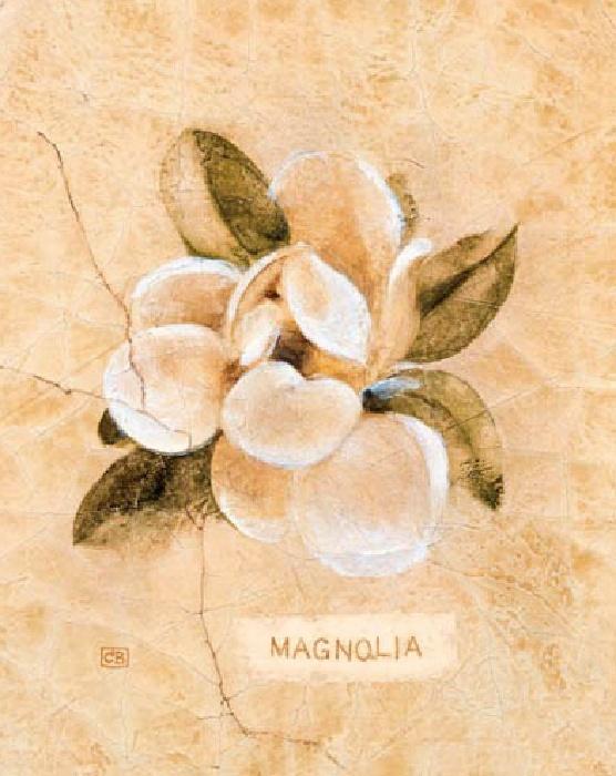 Magnolia on Cracked Linen