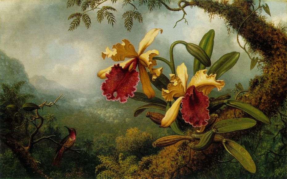 Orchids and Hummingbird