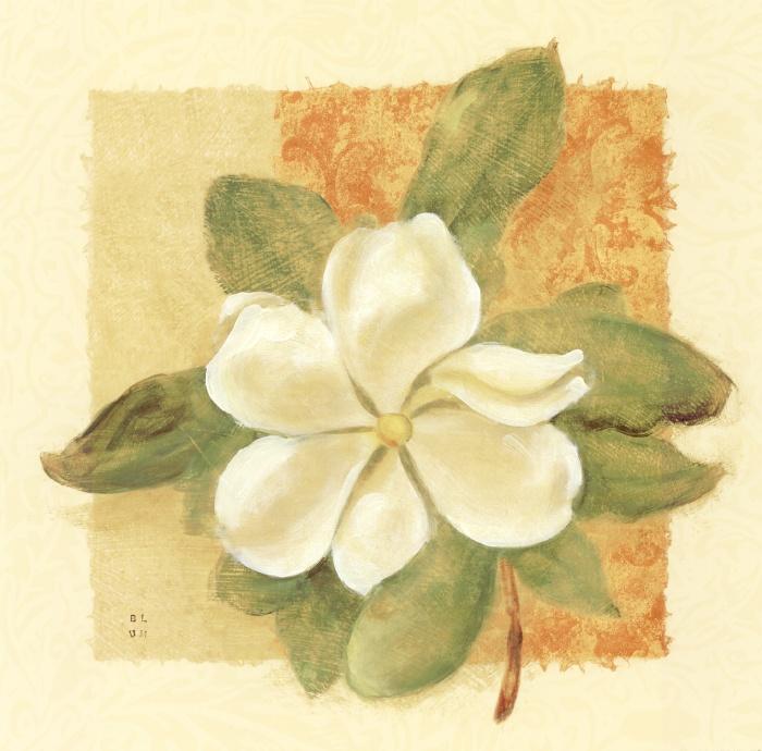 Magnolia of Spring