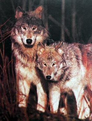 Watchers of the Woods