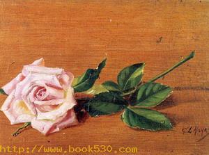 Rose 1887