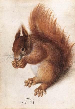 Squirrel 1578