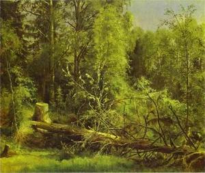Fallen Tree 1875