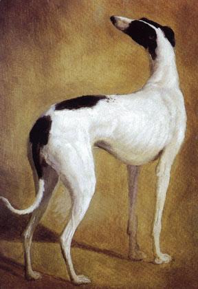 Study of the Greyhound