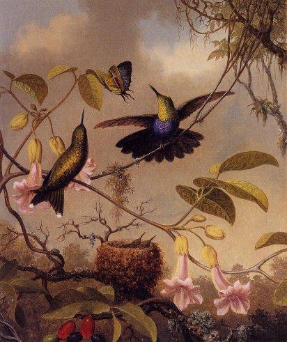 Martin Johnson Heade - Fort-Tailed Woodnymph