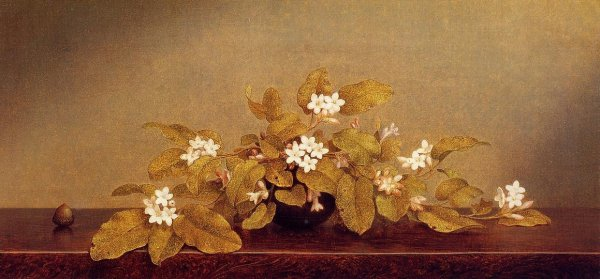 Martin Johnson Heade - Trailing Arbutis