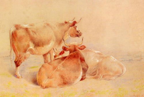 Cattle Resting 2