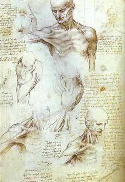 Leonardo da Vinci The Neck and Shoulder of a Man Oil Painting