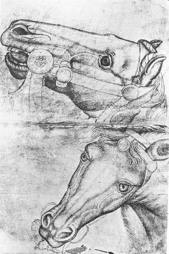 Study of Horse Heads