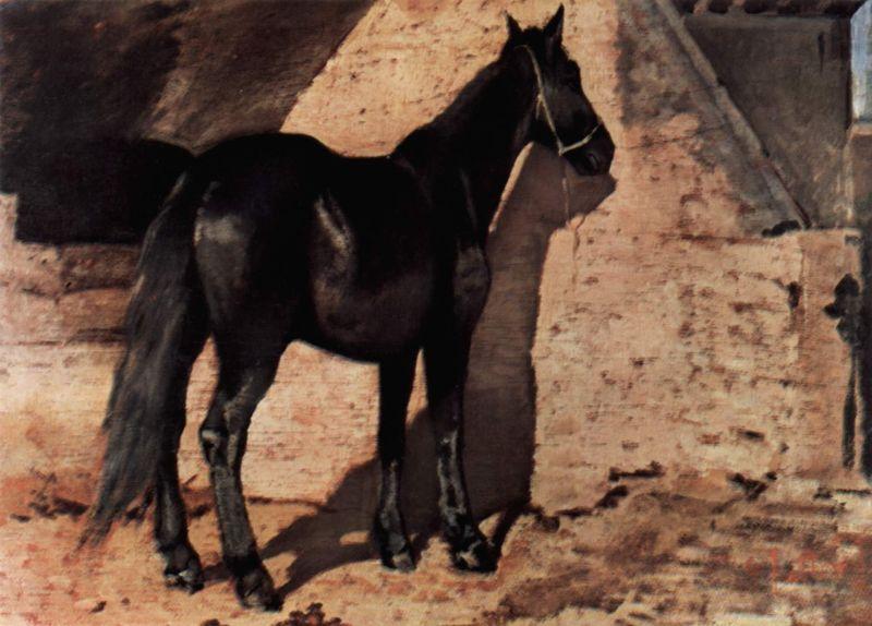 Black Horse in the Sun