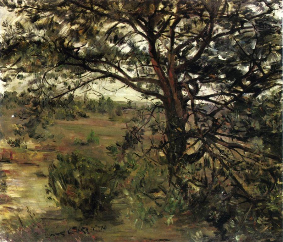 Luneberger Heide