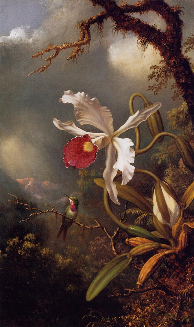 An Amethyst Hummingbird with a White Orchid