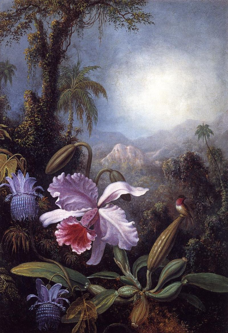 Orchids, Passion Flowers and Hummingbird