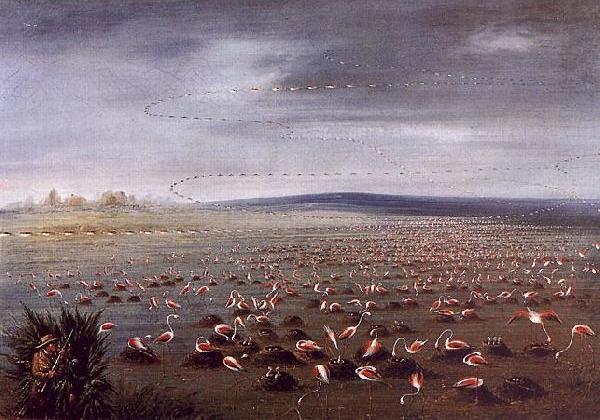 Ambush for Flamingoes