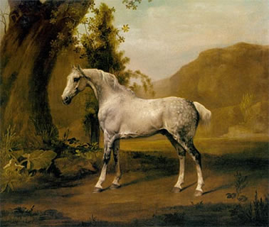 A Grey Stallion In a Landscape
