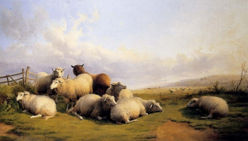 Sheep In An Extensive Landscape