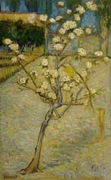 Pear Trees in Bloom, Arles 1888 - Vincent Van Gogh