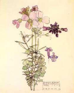 Charles Rennie Mackintosh Cuckoo Flower 1910