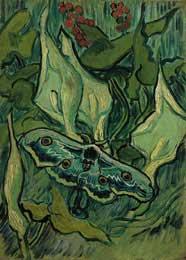Emperor Moth, St. Remy 5/1889 - Vincent Van Gogh