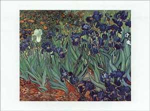Iride - Vincent Van Gogh