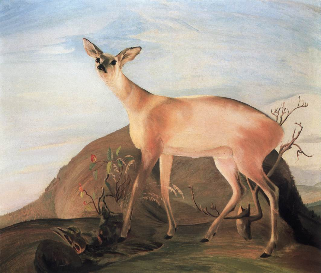 CSONTVARY KOSZTKA Tivadar Deer