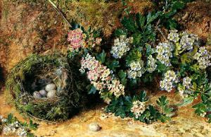 William Henry Hunt Chaffinch Nest and May Blossom